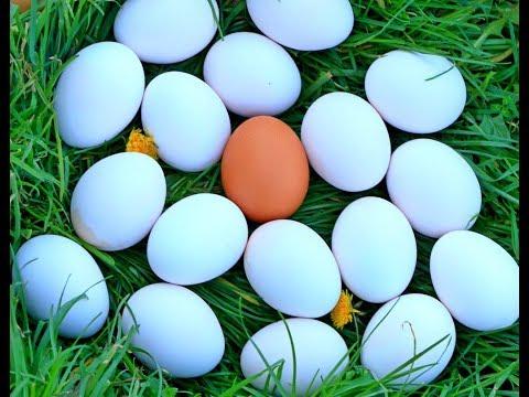 Izbeljivanje jaja za Uskrs –  Šerpica – How to Make Easter Eggs